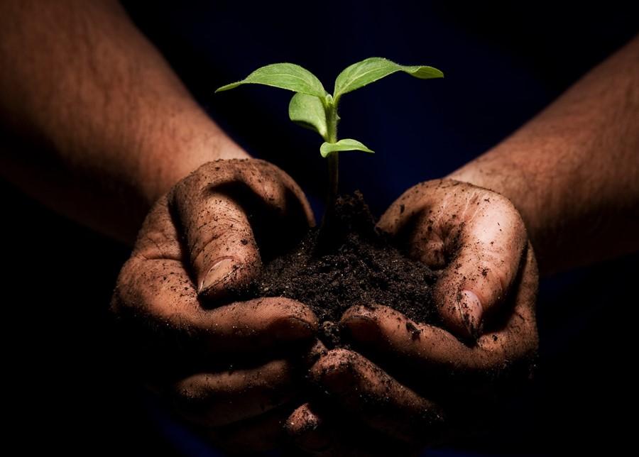 Plants Dont Make Nutrients